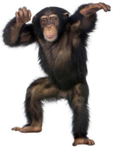 monkeys_av2