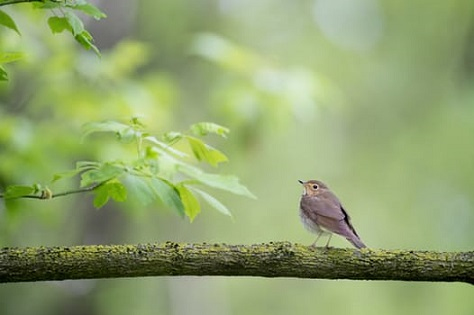 branch-and-bird